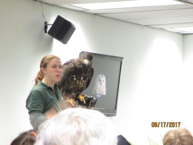 Eagle at the raptor center